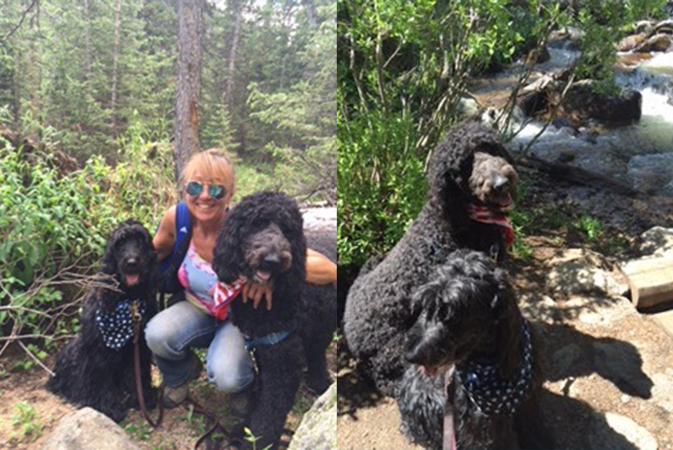 Decorative Materials Freedom Service Dog Training