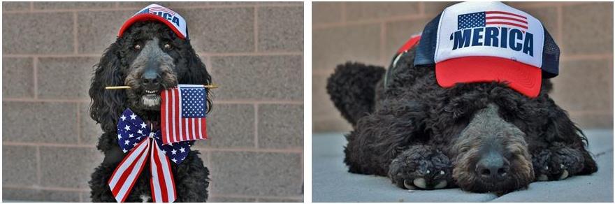 Veterans Day Freedom Service Dog